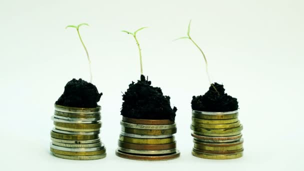 Golden coins in soil ground with young plant. Money growth increase concept.