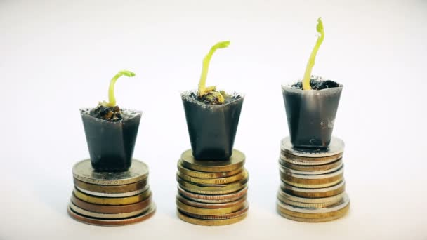 magnifying glass looking at three small green plants growing on golden coins, money tree, financial