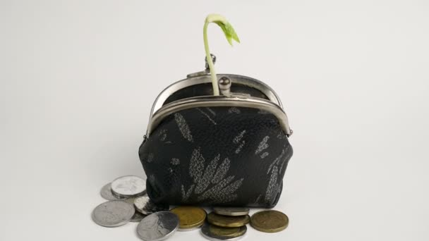 Plant growing from purse, money business finance growth concept, isolated on white