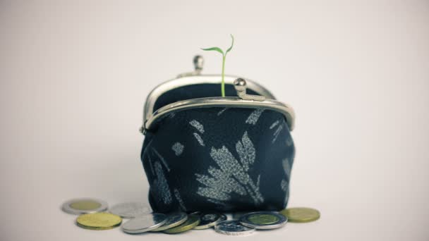 Plant growing from wallet, pile of coins, money business finance growth concept, isolated on white