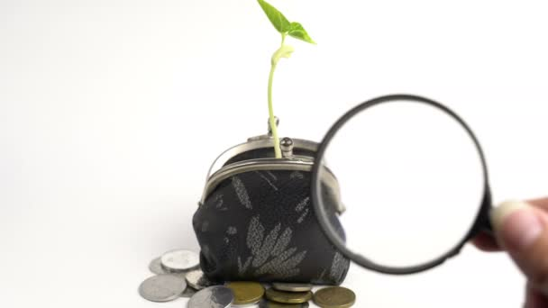 Money business finance bank concept, purse with growing plant, money tree growth, golden coins