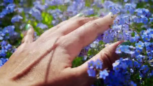 Közeli fel Womans kéz megható gyönyörű kék elfelejteni-Me-nem virágok. Feeling a csodásan világ