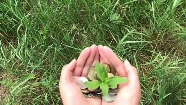 weibliche Hand hält Haufen Münzen mit wachsender Pflanze, Geld finanziert Wachstumskonzept