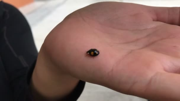 fekete katicabogár rovar kúszik a kéz idő megszűnik, az élet módja koncepció