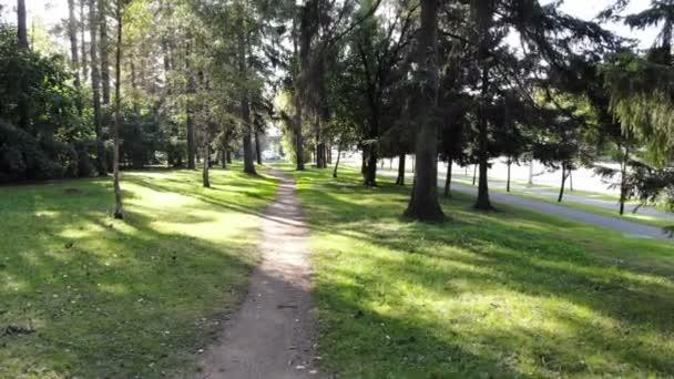 Létání zeleným lesem, podzimní scéna slunečný park
