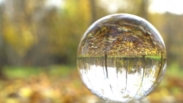 Nature Video Scenario scene close up in crystal ball with backgorund of colorful maple leaf and
