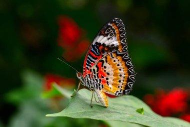 Closeup   beautiful butterfly sitting on flower