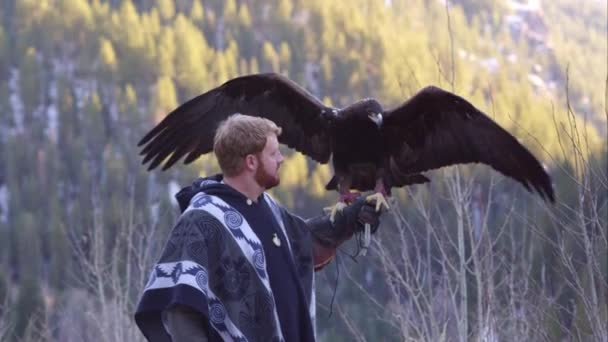 Golden eagle perched on falconers arm.