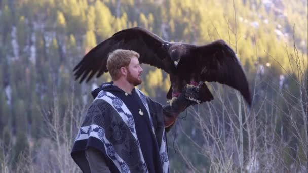 Golden eagle perched on falconers glove.