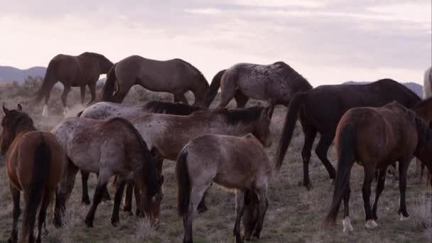 Pohled z divokého koně stádo pastvy v poušti Utah.