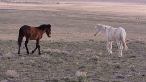 Pohled 2 divoké koně jít do sebe a touch nosy.