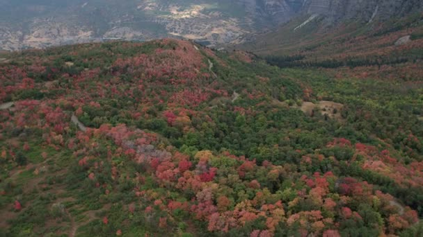 Aerial view flying over trees on hillside showing colorful trees with road winding through the forest.