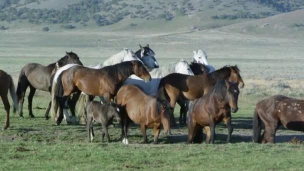 Malá skupina divokých koní, pohybující se spolu celé rozlehlé krajině.