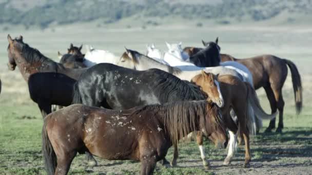 Dva koně, hraje vedle stáda postávat zobrazení bitva jizvy.