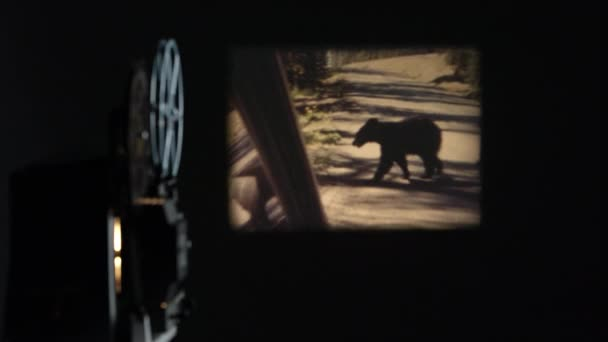 alter Film von Bär in Yellowstone projiziert auf Wand, der Projektor spielt.