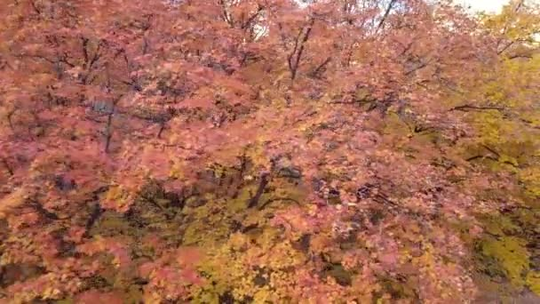 Aerial view of colorful trees in mountains