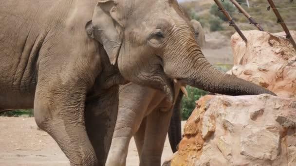 Velký slon stojící a pitná voda z kamenité studny za slunečného dne v slo-mo Vzrušující pohled na velkého slona blíží, stojí a pije sladkou vodu z kamenité studny v zoo za slunečného dne v létě ve zpomaleném filmu.