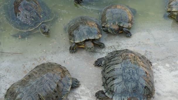 Egy tucat kis teknősök, amelynek pihenni a homokos tengerparton egy napsütéses napon a nyáron lenyűgöző kilátás egy tucat kis színes teknősbékák pihentető a homokos tenger partján egy napsütéses napon a nyáron. Jól érzik magukat, vidámak és energiával teli.