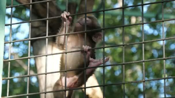 Baba majom és anyja mászik fel egy fém háló kerítés egy állatkertben nyáron Vidám kilátás nyílik egy kismajom és az anyja mászik fel egy fém háló kerítés egy nyitott állatkertben zöld fák egy napsütéses napon nyáron. Vidámnak és jókedvűnek tűnnek..