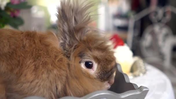 schönes braunes Kaninchen.