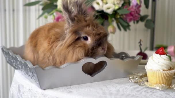 Beautiful brown rabbit.