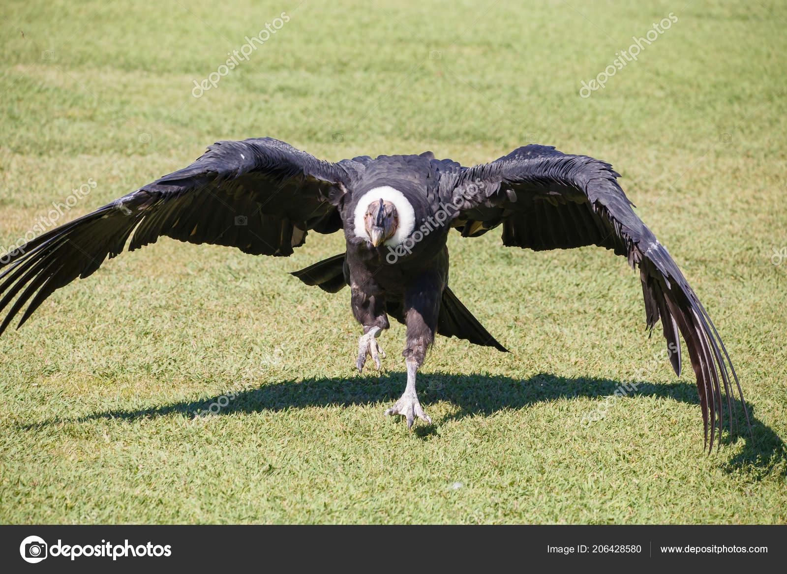 Obrázek největšího ptáka na světě