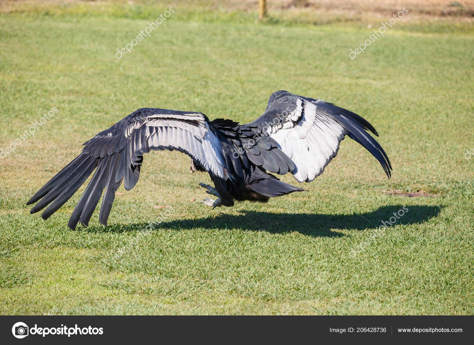 Obrázky největšího ptáka na světě