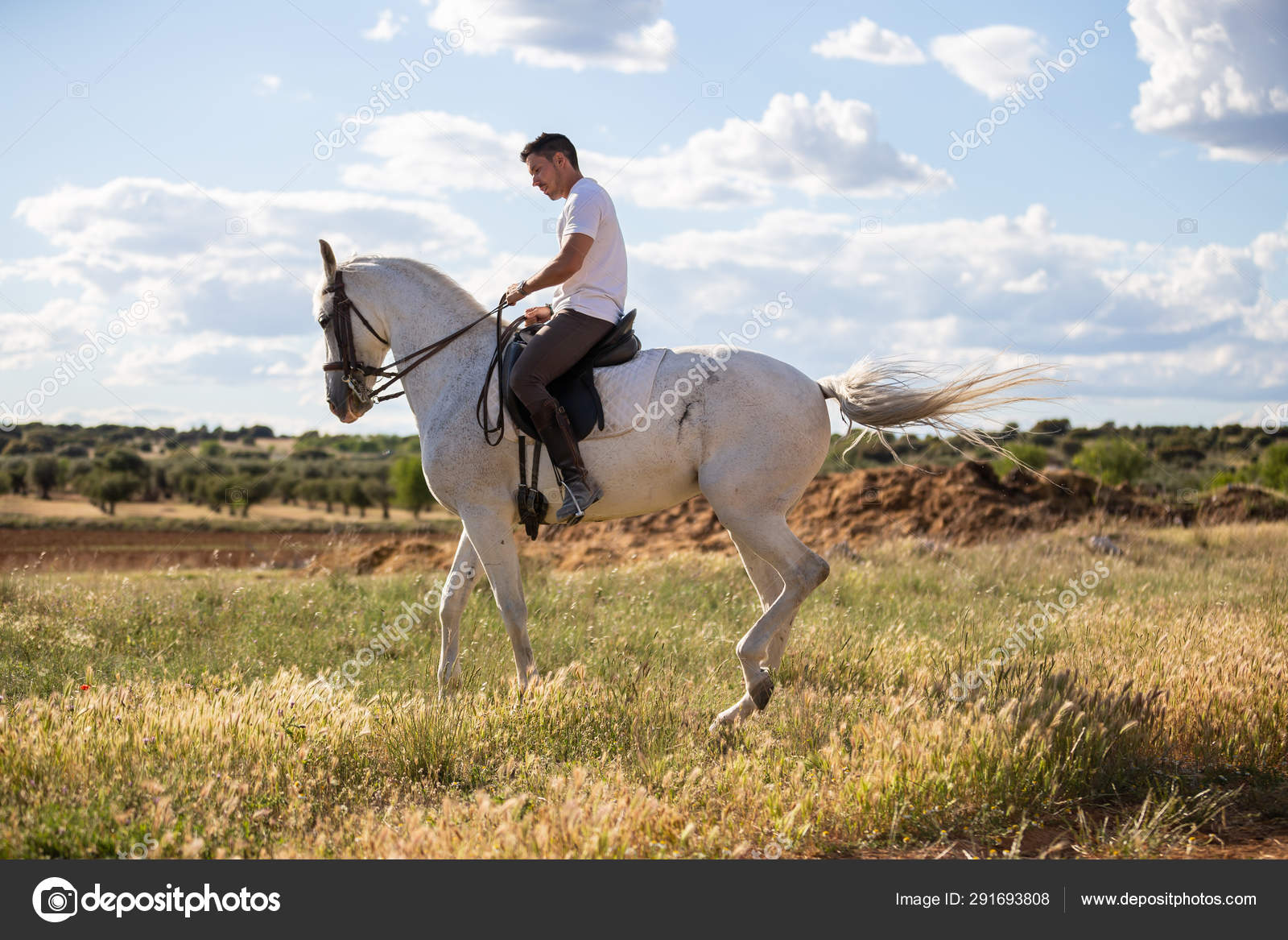 Young Guy Casual Outfit Riding White Horse Meadow Sunny Day Stock Photo C Pablobenii 291693808
