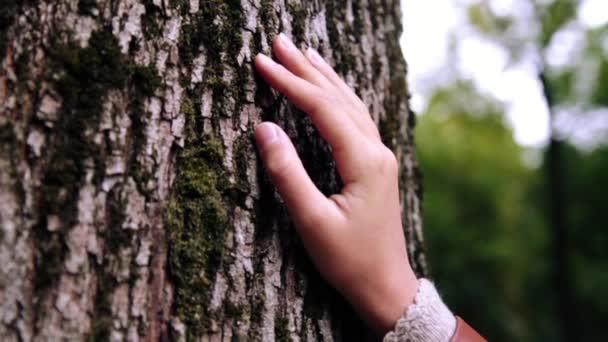 Dětská ruka dotkne kůra stromu