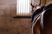 Fotografie horse stands and looks out the window with bars