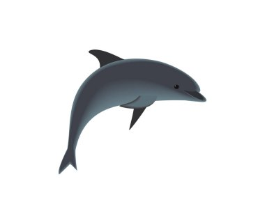 Dolphins on white background
