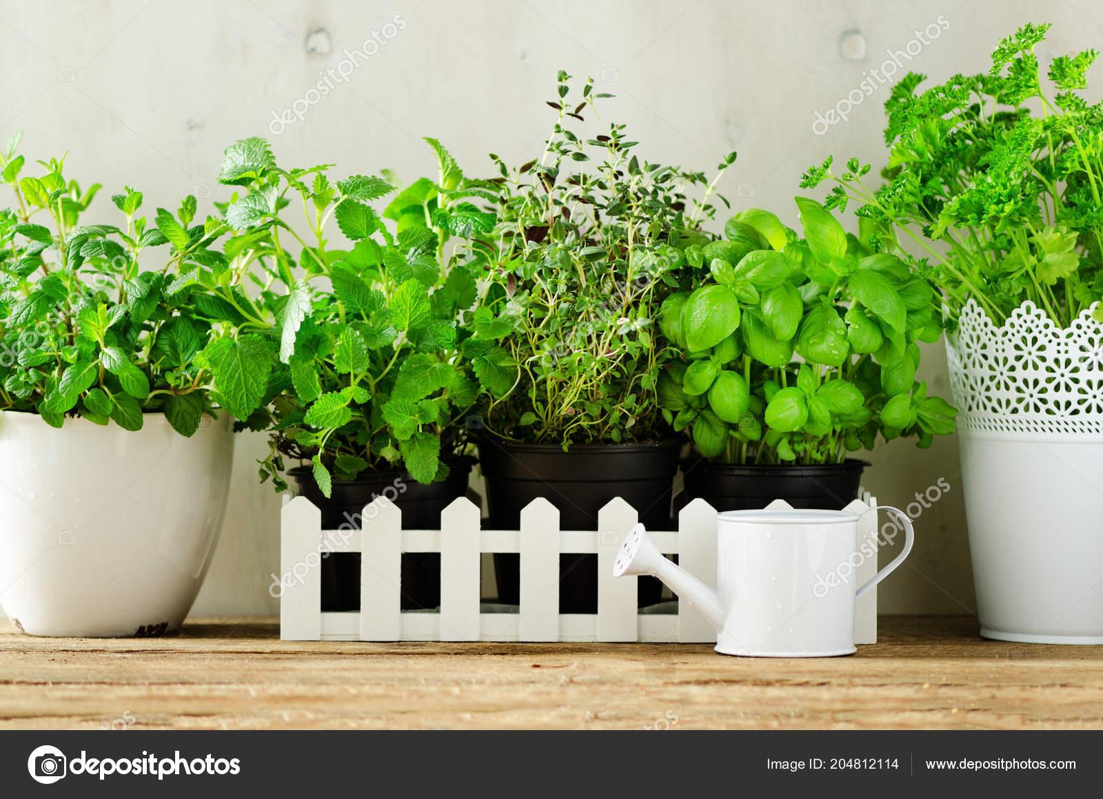 Pot Plante En Bois vert des herbes aromatiques fraîches - mélisse, menthe, thym