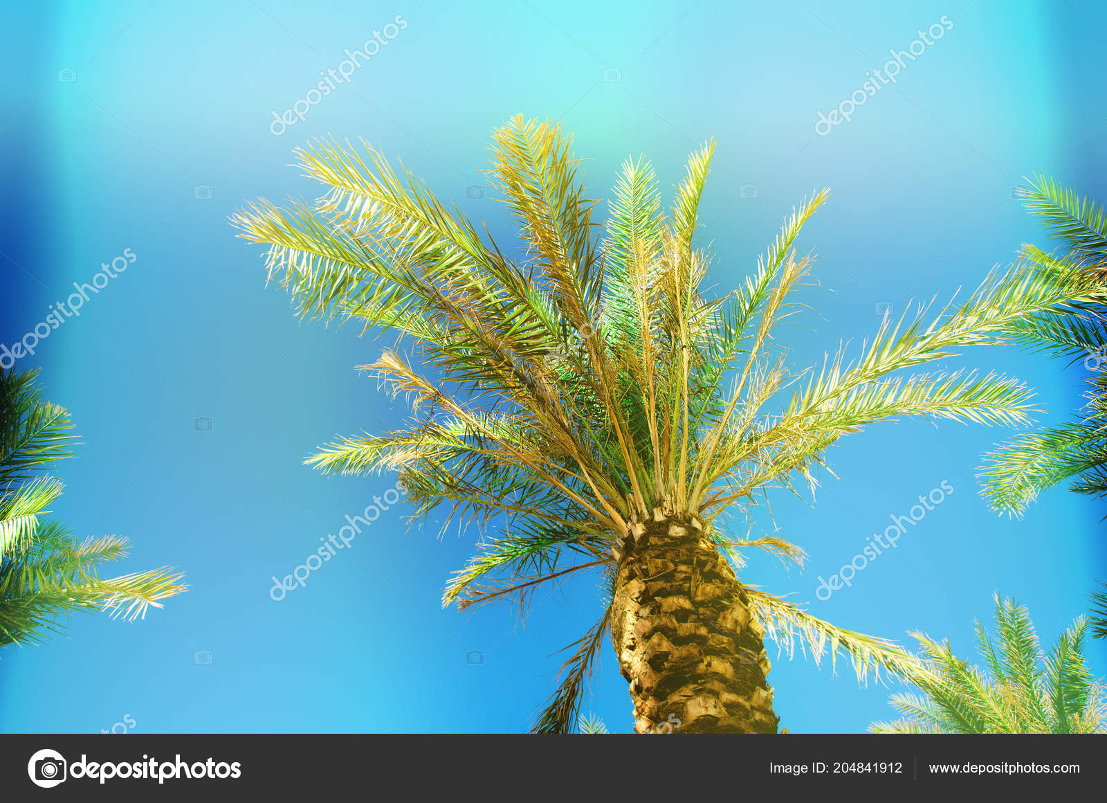 Palms with colorful pop art effect. Vintage stylized photo with ...