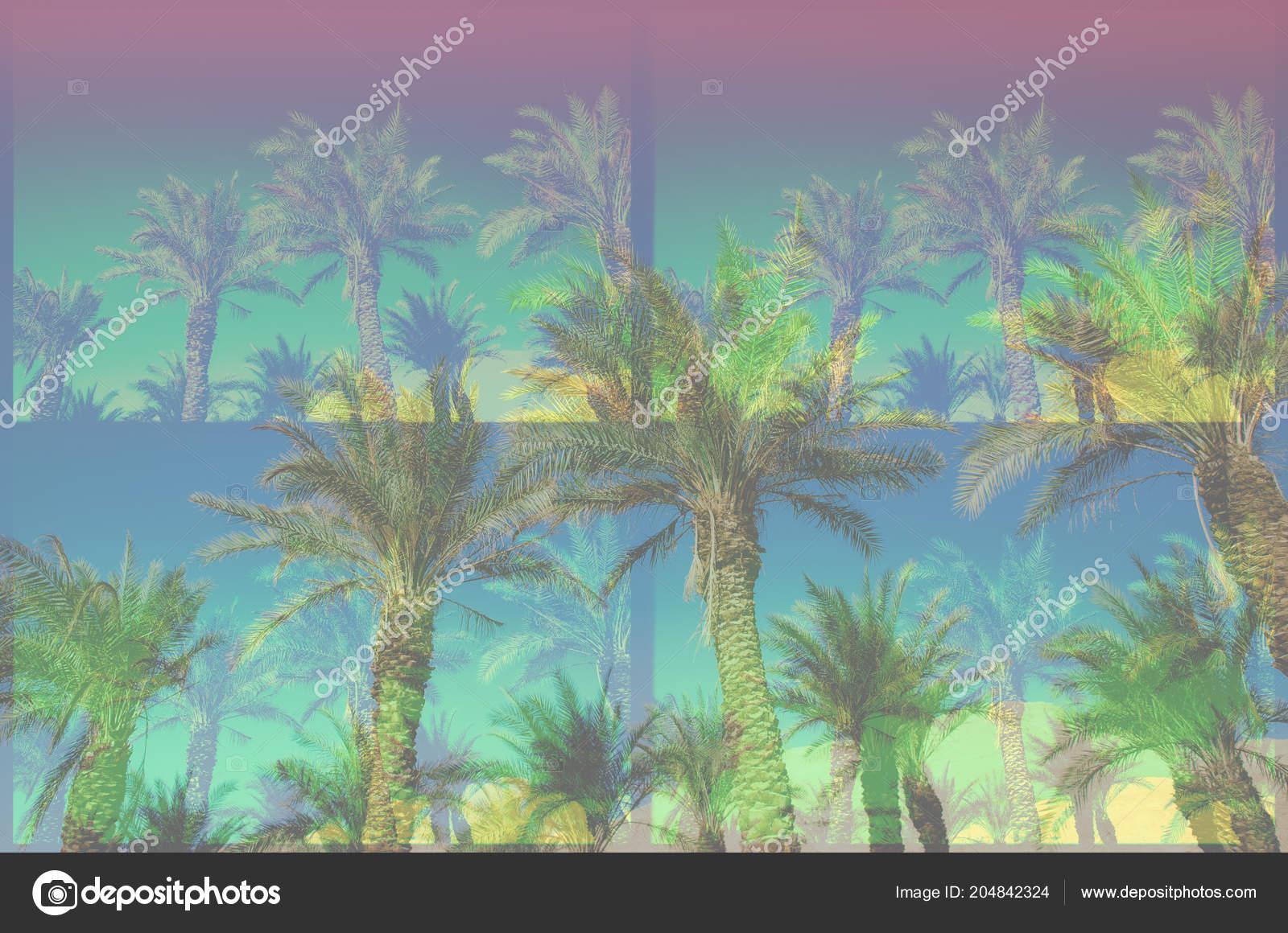Chizhe Rainbow Colored Palm Trees – StarasBija