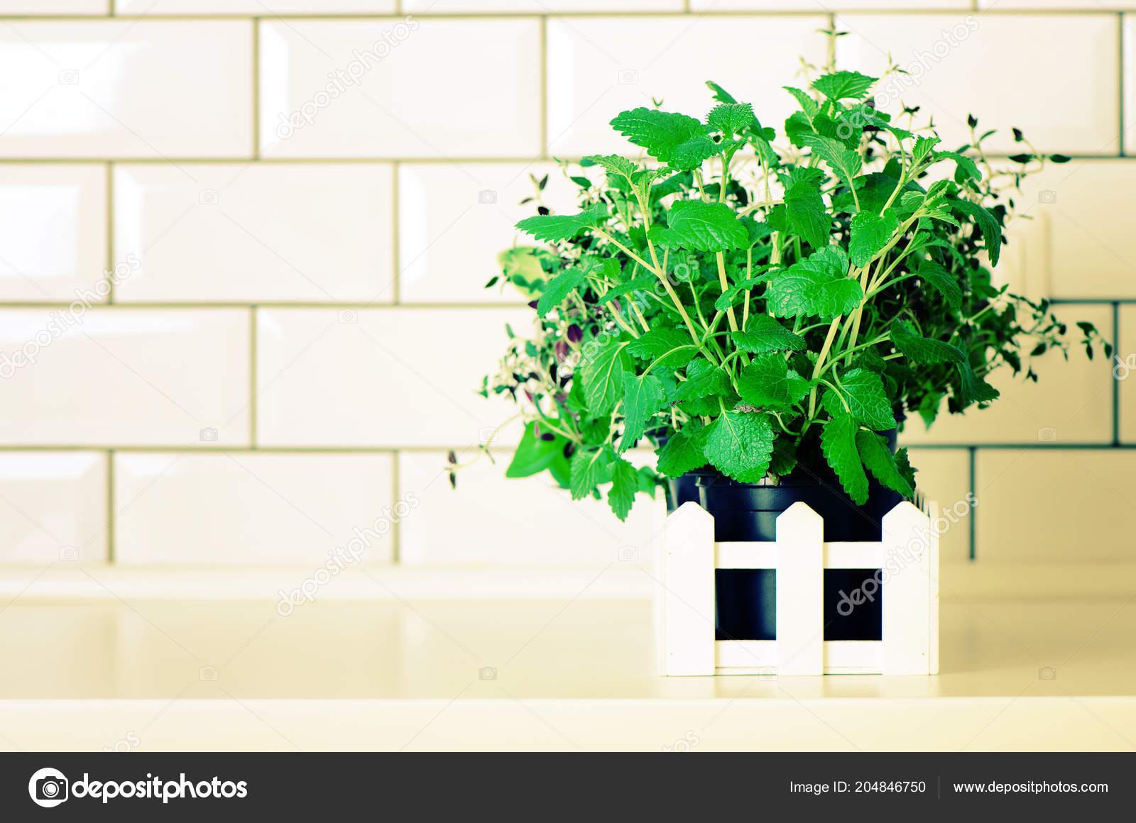 Menta, timo, basilico, prezzemolo - erbe aromatiche biologiche sul ...