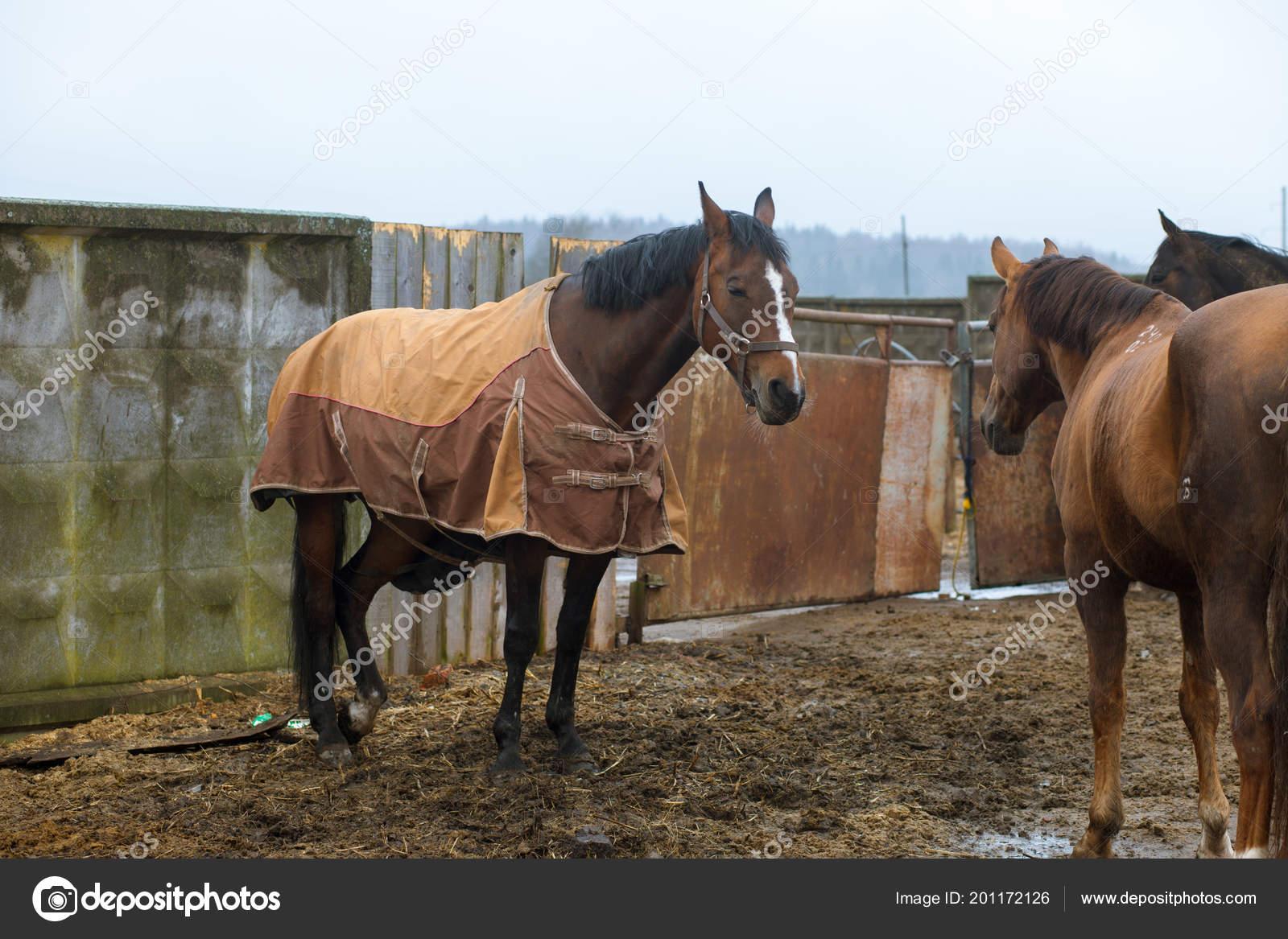Beautiful Horses Animals Pasture Stables Horseback Riding Stock Photo C Vitizh 201172126