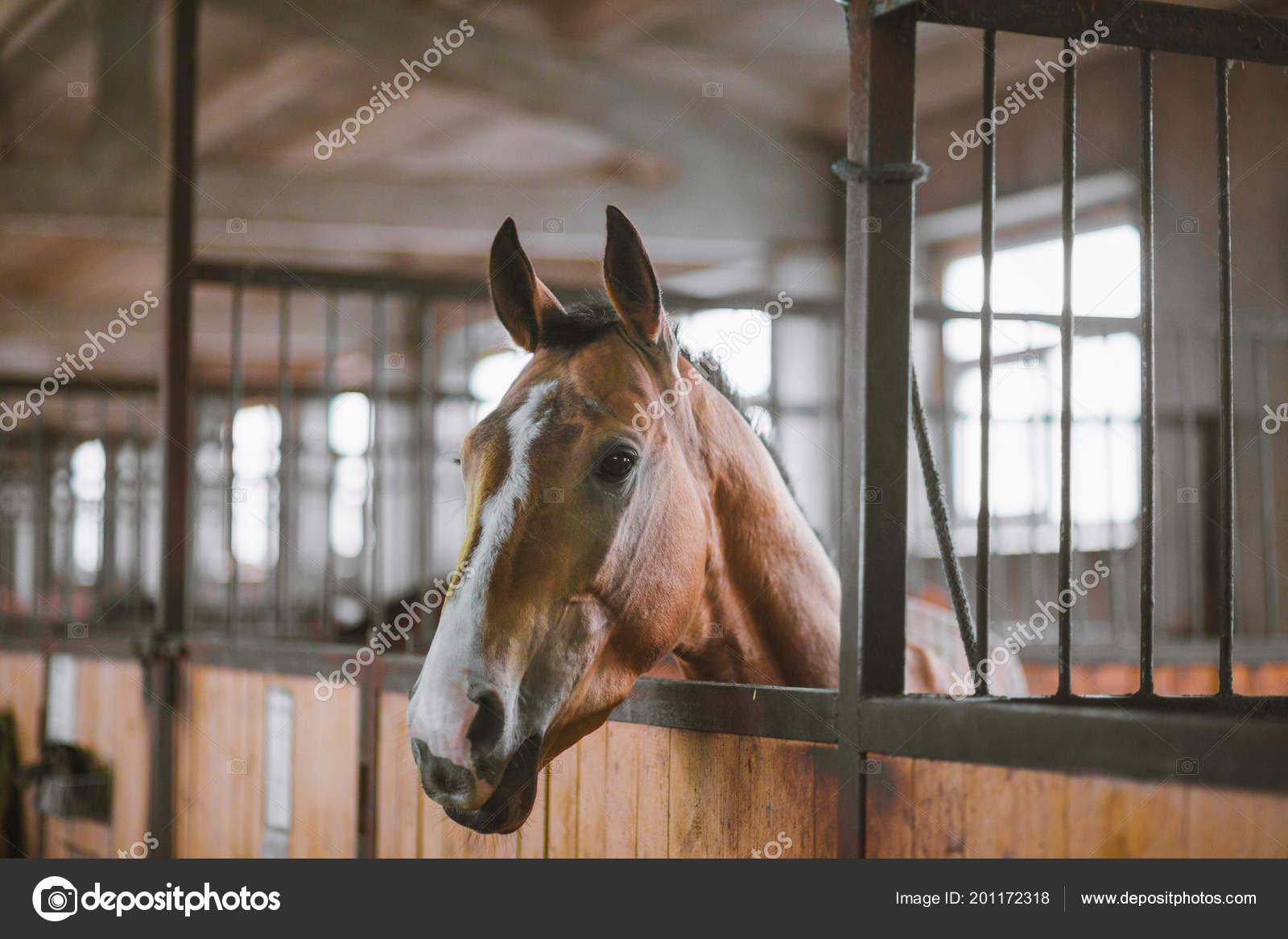 Beautiful Horses Animals Pasture Stables Horseback Riding Stock Photo C Vitizh 201172318
