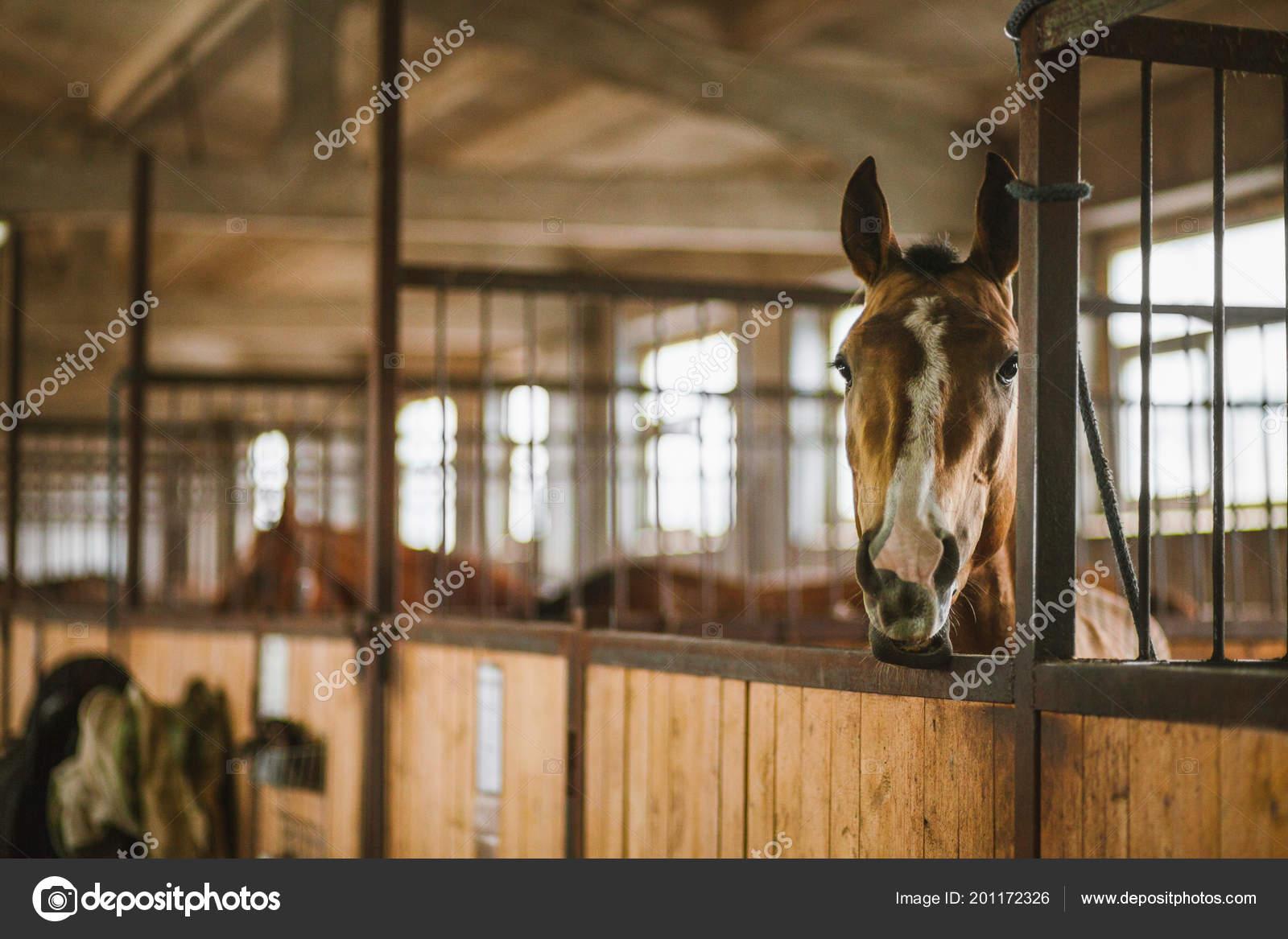 Beautiful Horses Animals Pasture Stables Horseback Riding Stock Photo C Vitizh 201172326