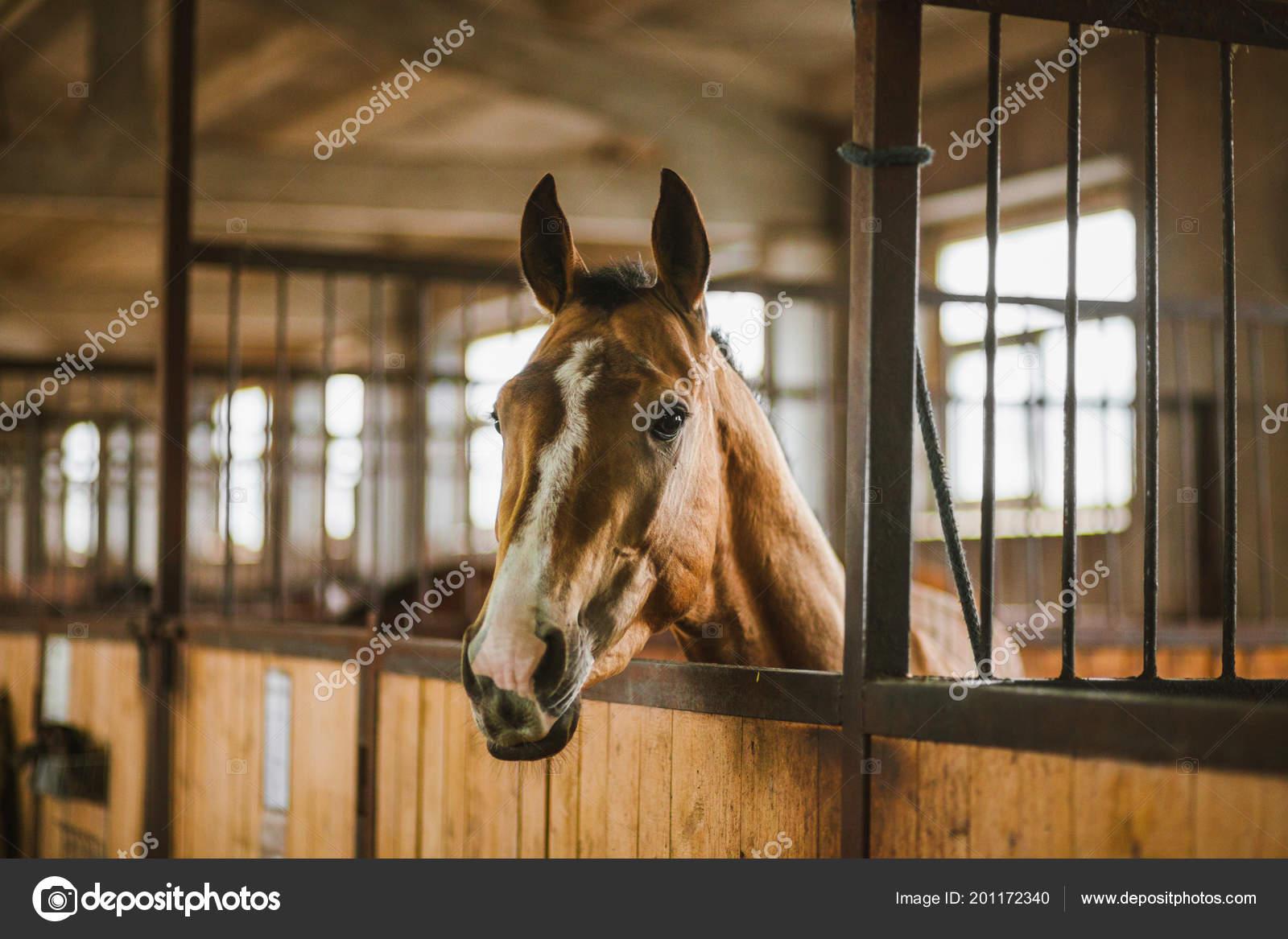 Beautiful Horses Animals Pasture Stables Horseback Riding Stock Photo C Vitizh 201172340
