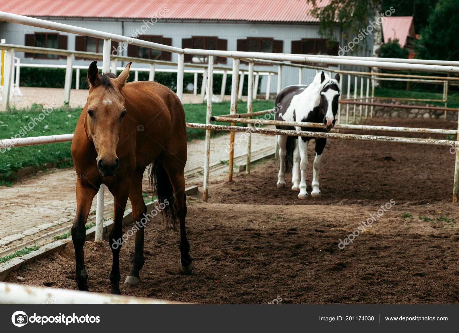 Beautiful Horses Animals Pasture Stables Horseback Riding Stock Photo C Vitizh 201174030