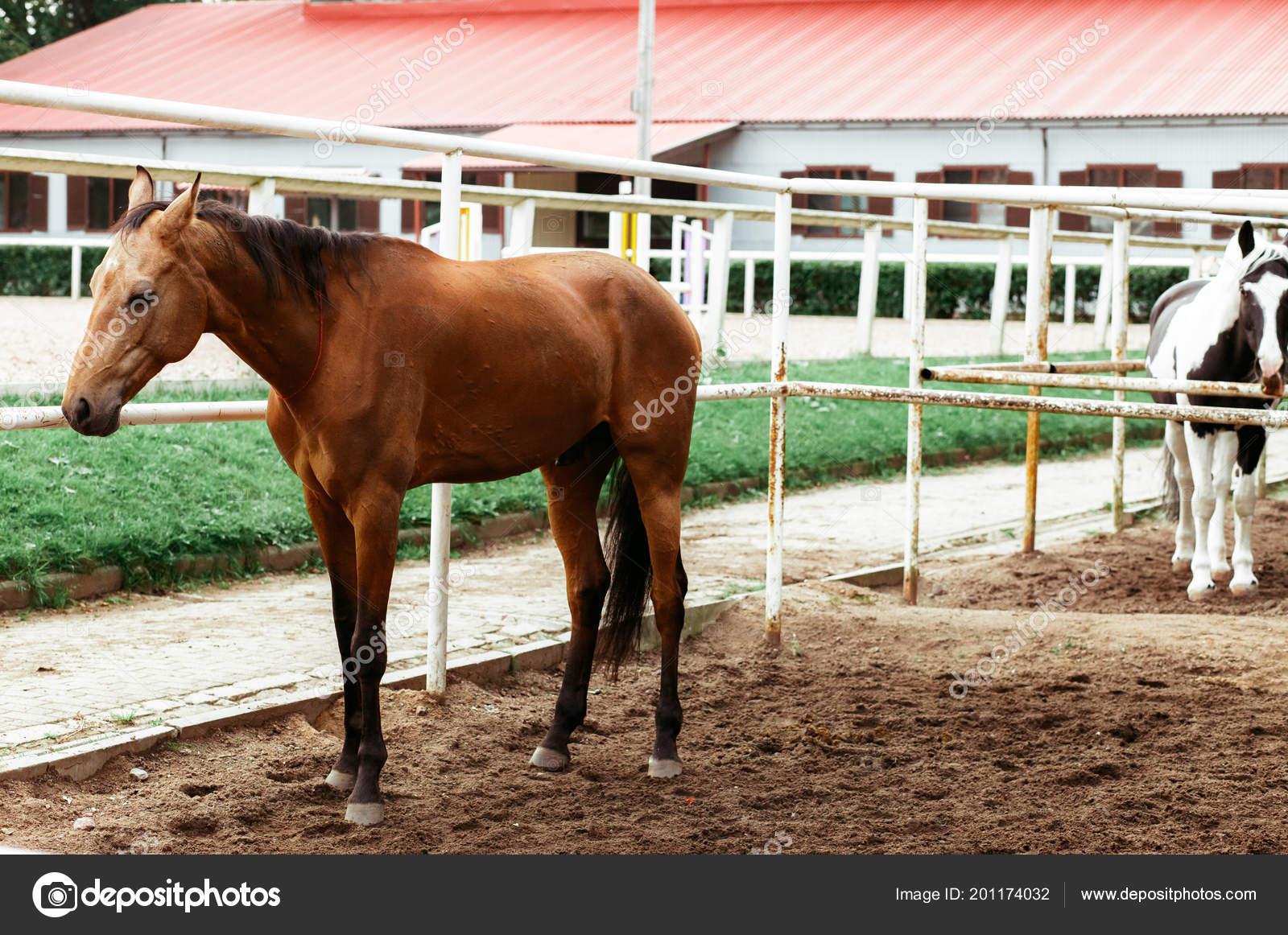 Beautiful Horses Animals Pasture Stables Horseback Riding Stock Photo C Vitizh 201174032