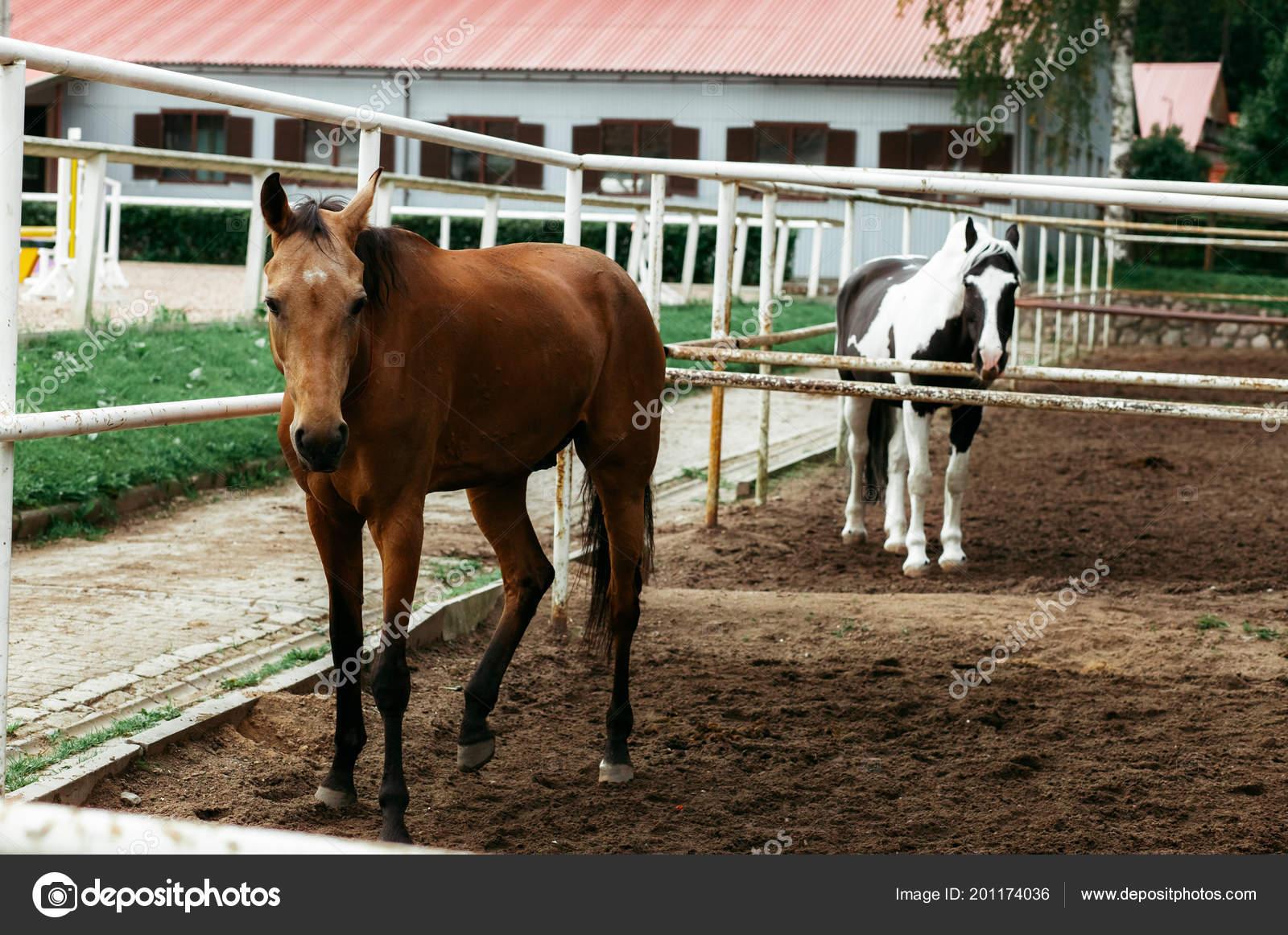 Beautiful Horses Animals Pasture Stables Horseback Riding Stock Photo C Vitizh 201174036
