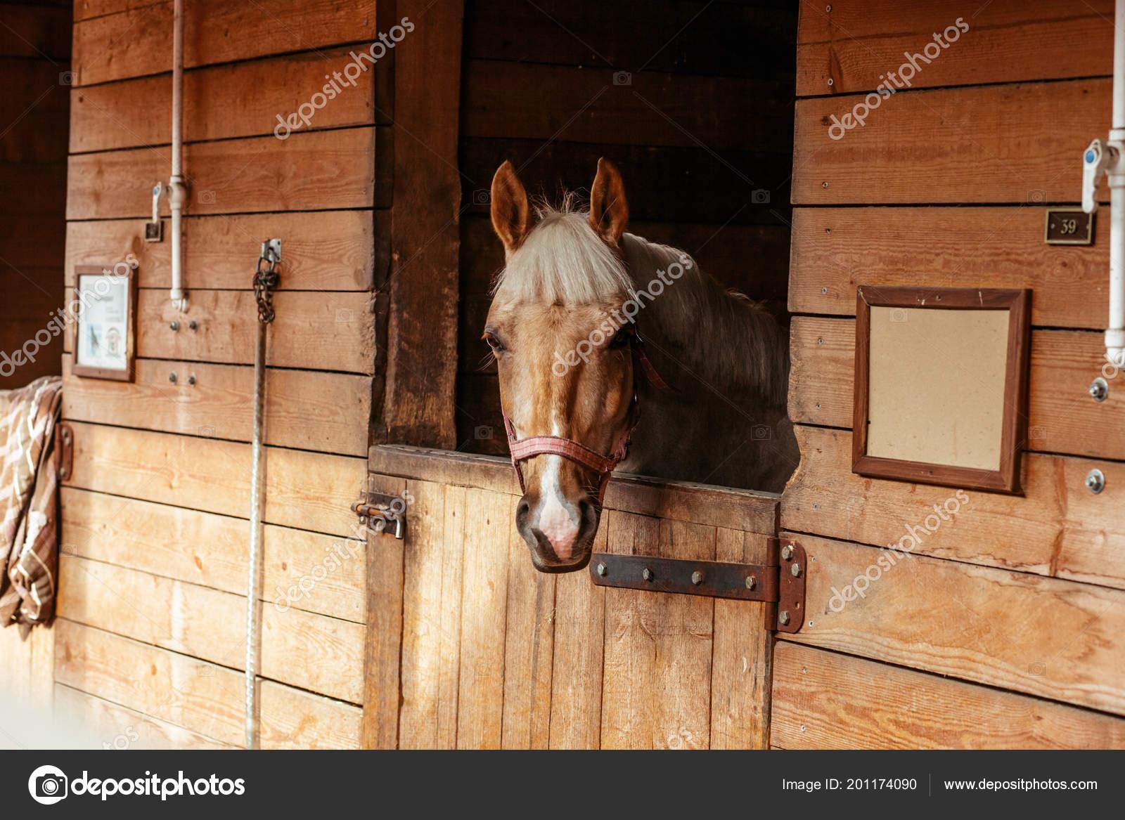 Beautiful Horses Animals Pasture Stables Horseback Riding Stock Photo C Vitizh 201174090