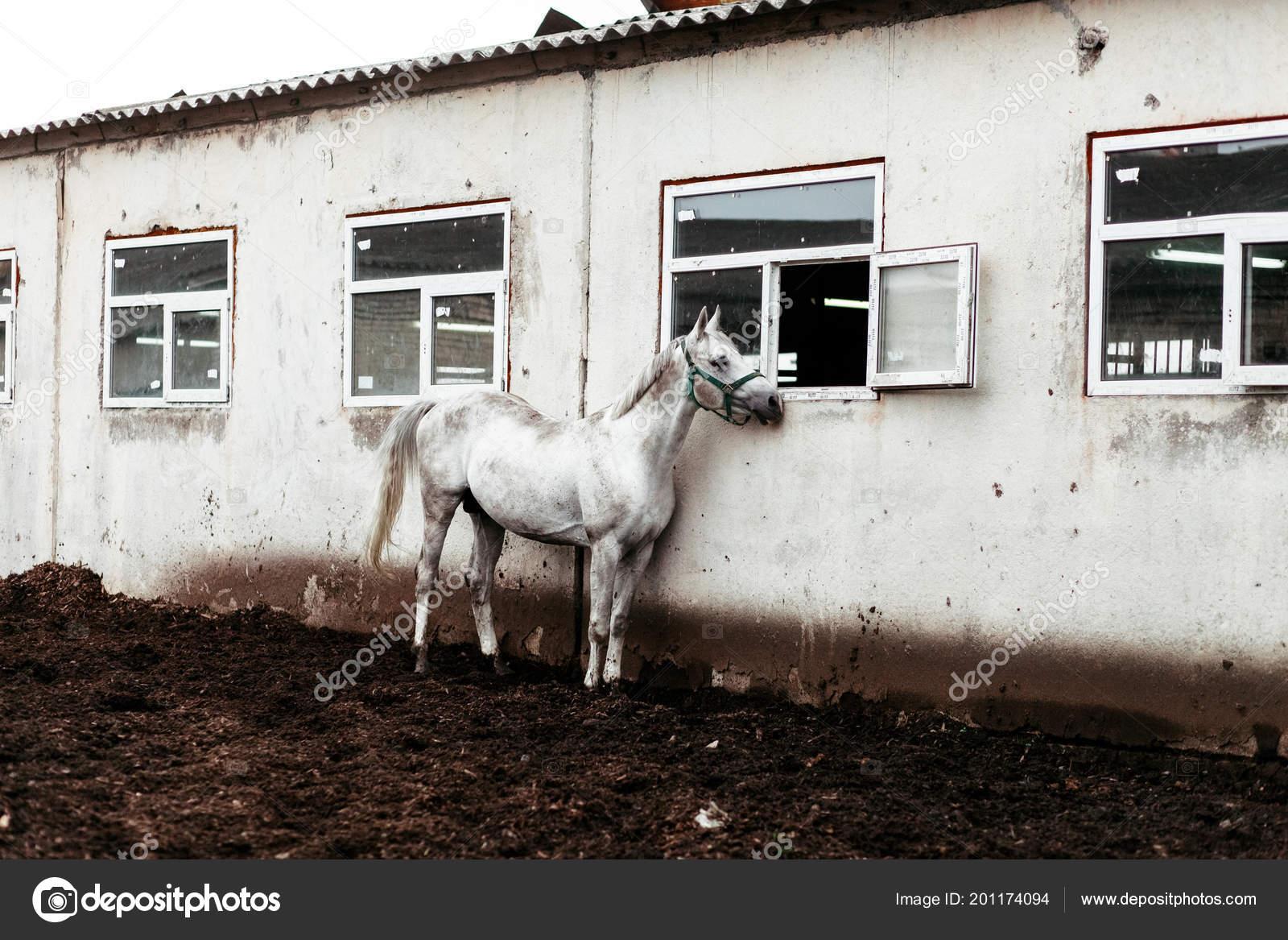 Beautiful Horses Animals Pasture Stables Horseback Riding Stock Photo C Vitizh 201174094