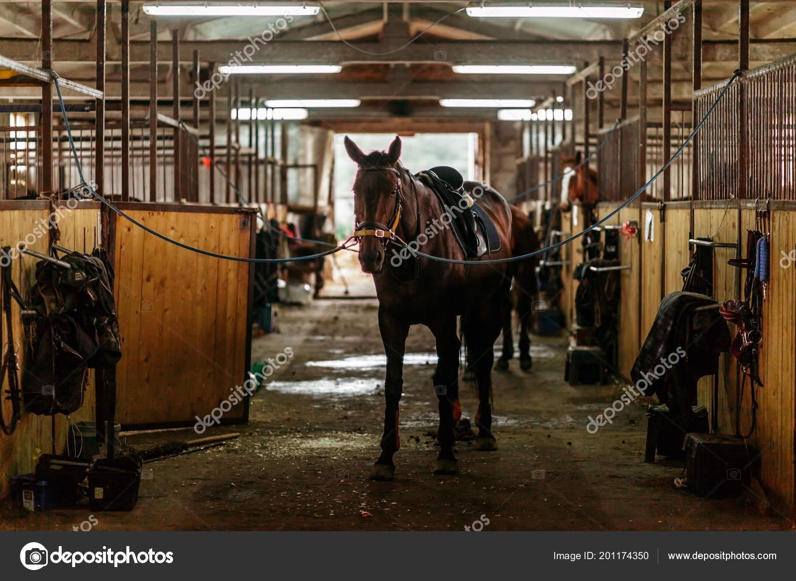 Beautiful Horses Animals Pasture Stables Horseback Riding Stock Photo C Vitizh 201174350