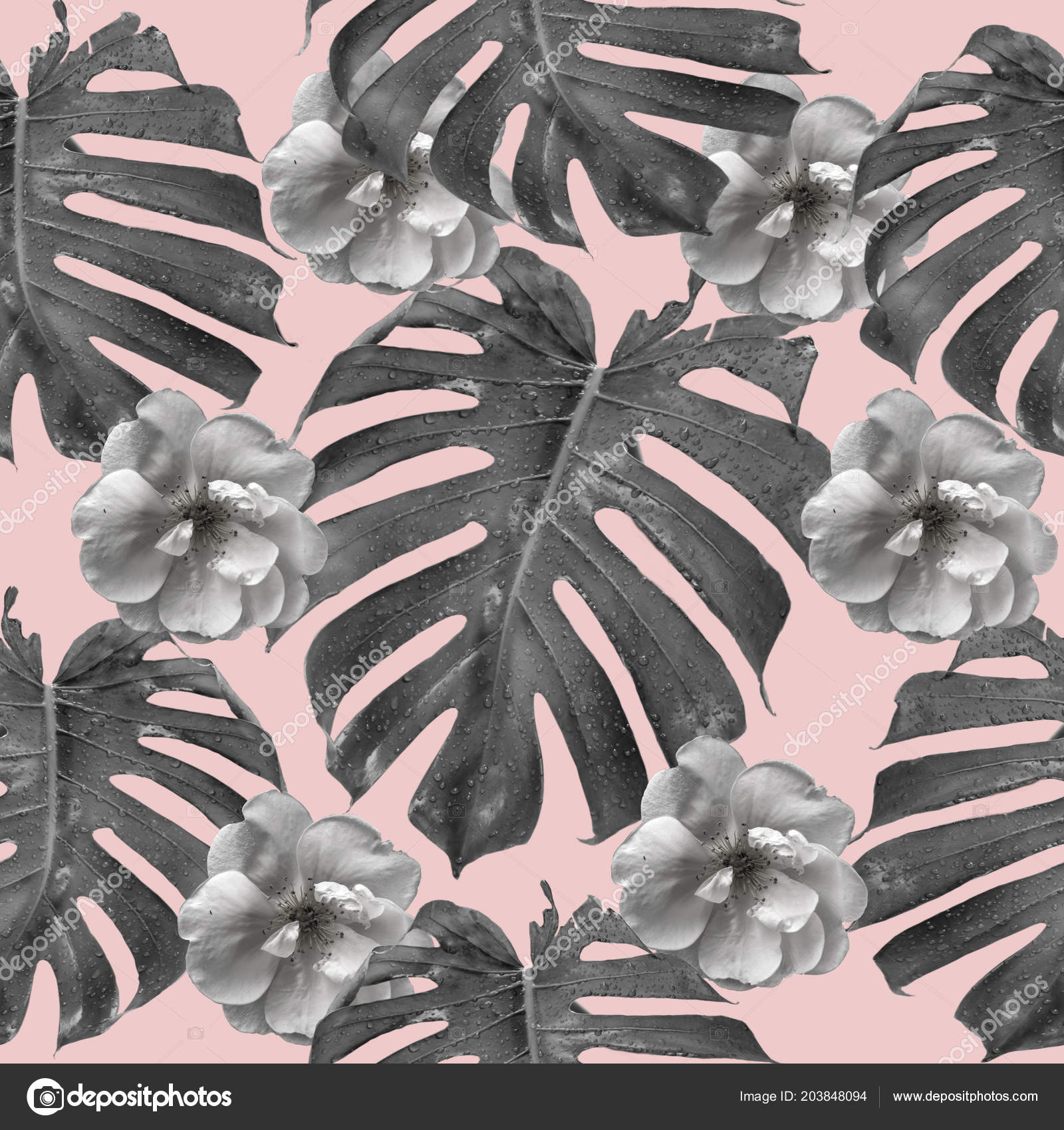 Black and white monstera leaf seamless pattern on a pink background contemporary collage art nature art photo by