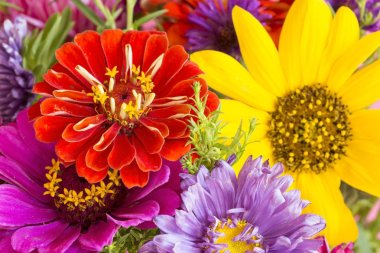 Colorful flowers close up