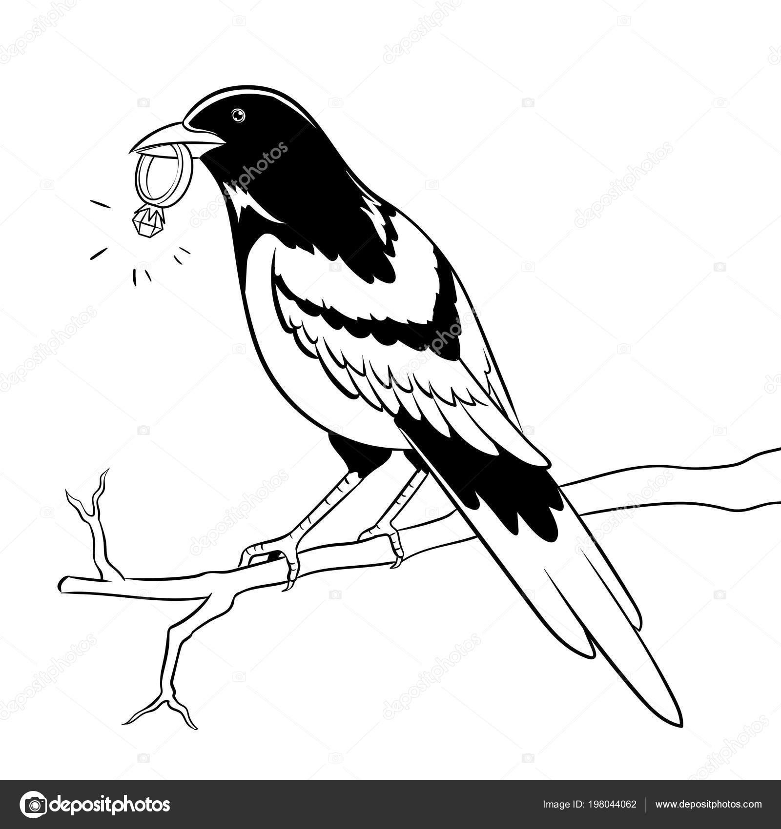 Pájaro de urraca con el vector de anillo de oro para colorear ...