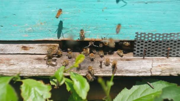 Méhek repülnek a méhkas, közelről tekintettel a dolgozó méhek. Méh ház az erdőben. Méh kolónia körül repülő méhkas.