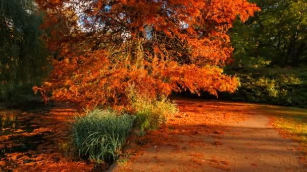 Posouvání shot z podzimního lesa u jezera během zlaté krásné odstíny červené, šarlatové, žluté a zelené